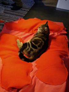 Katze liegt in genähter Gebärmutter